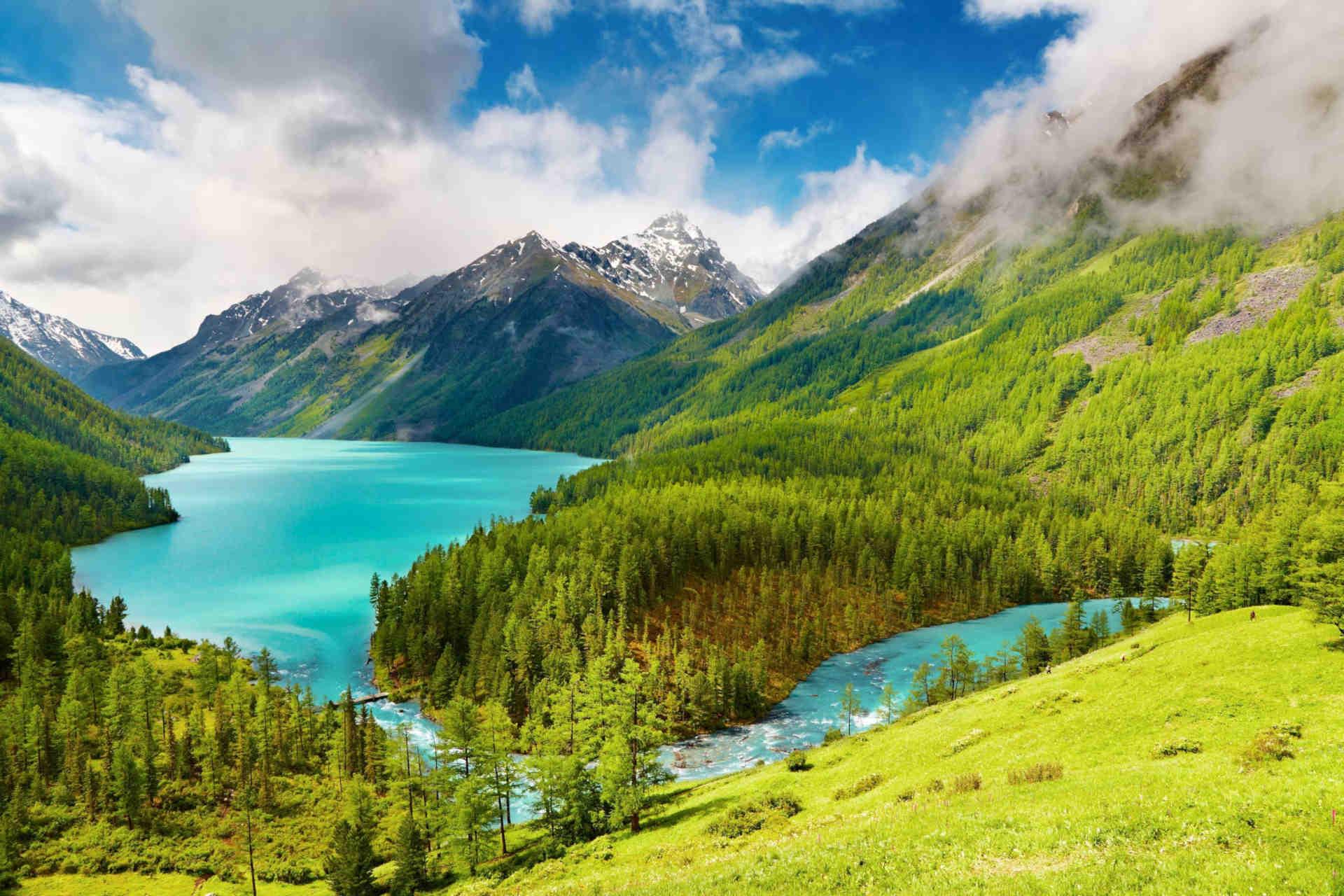 Neuseeland Semenvitae Gerstengras
