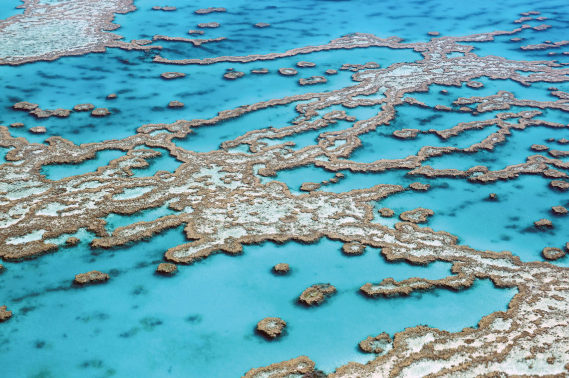 Semen Vitae Great Barrier Reef Australien