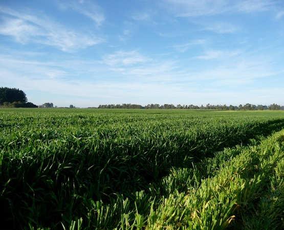 SemenVitae Farmland Neusseland